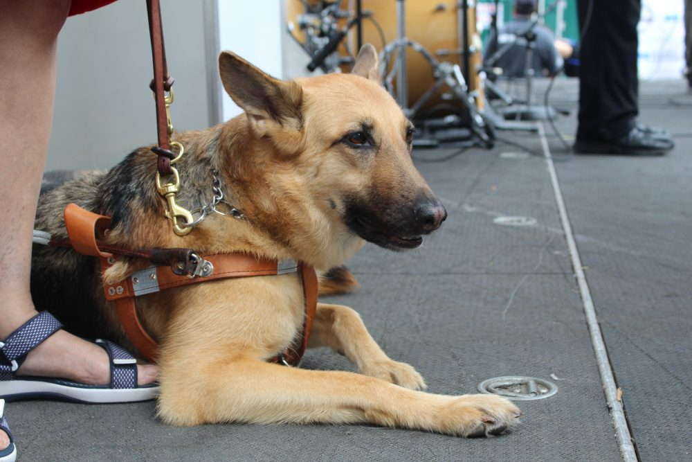 Photo of service dog on the stage at the 2018 Disability Pride Parade.