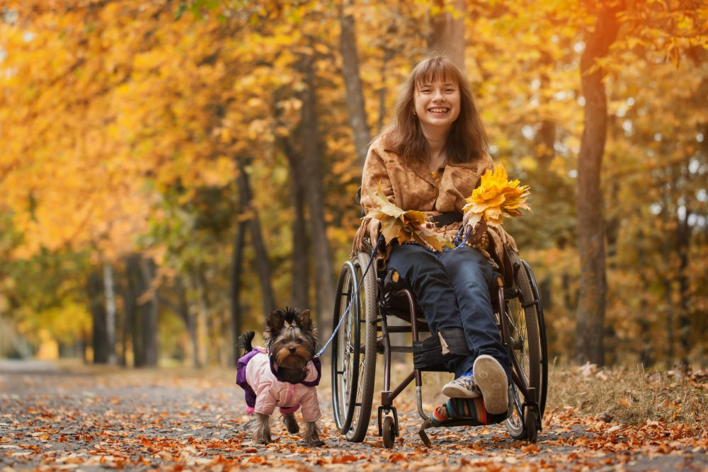 The smiling and cheerful girl on a wheelchair with the dog in autumn road.